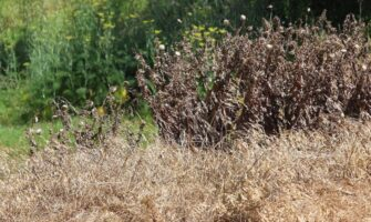 Using Herbicides Within the Vegetation-Free Strip Method