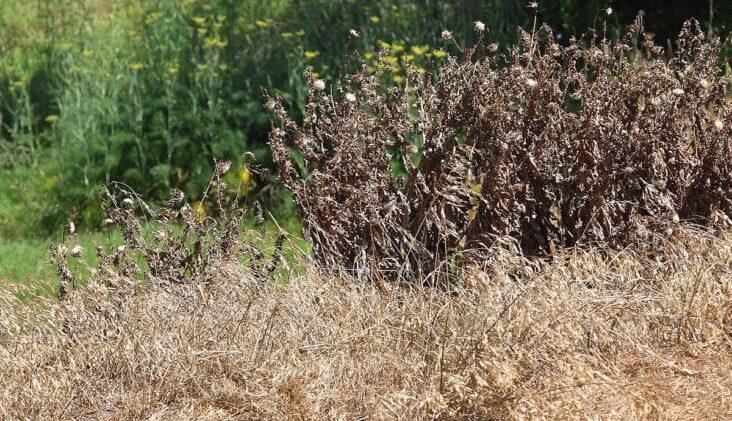 Using Herbicides Within the Vegetation-Free Strip Method