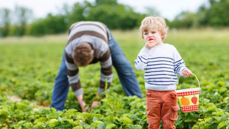 Children's Exposure to Pesticides