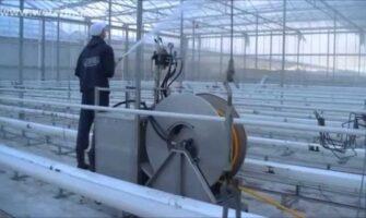 Greenhouse Sanitation