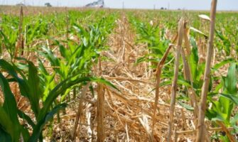 Climate Changing: No-Till for Soil Health?