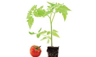 Tomato Weeds
