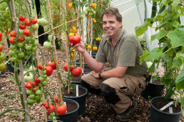 Exploring The Versatility Of Growing Tomatoes Growing