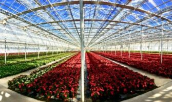 Greenhouse Crops