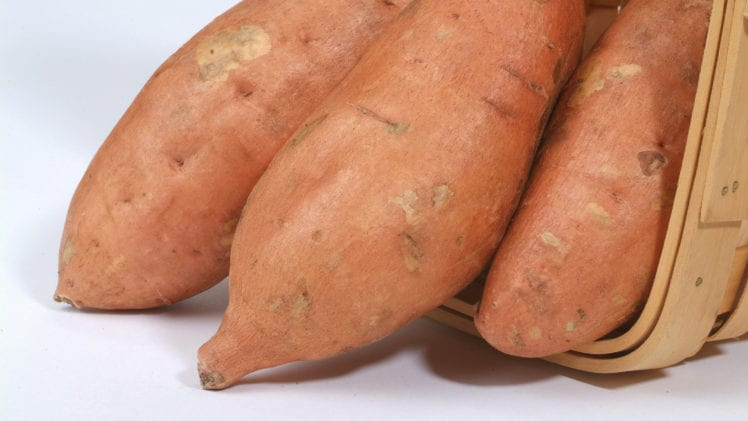 Sweet Potato Varieties