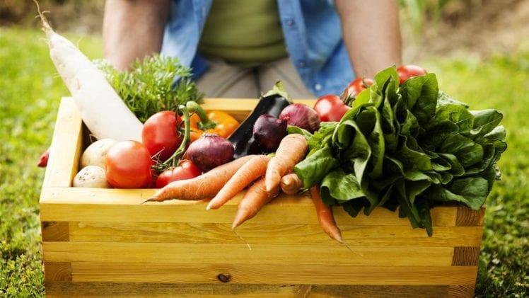 Fertilizing Fruits and Vegetables