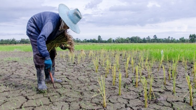 5 Terms Farmers Need to Know Regarding Climate Change