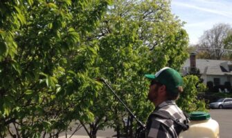 Building Tree Fruit Fertility