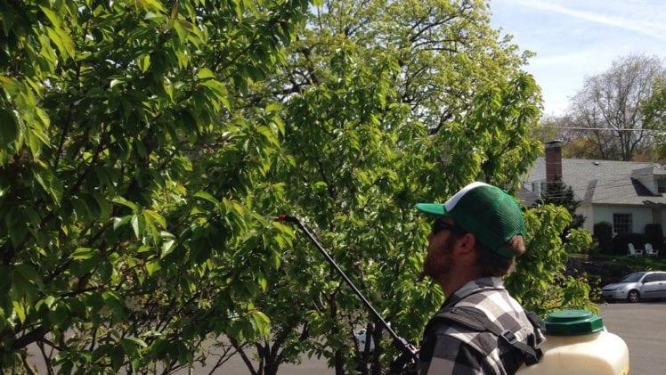 Building Tree Fruit Fertility