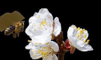 Creating A Permanent Habitat For Pollinators