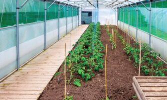 Use of Silicon for Healthier Greenhouse Plants