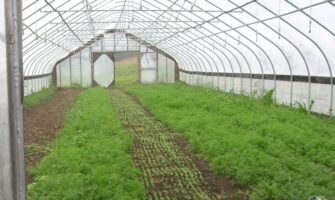 HIGH TUNNELS HELP SOUTHERN GROWERS