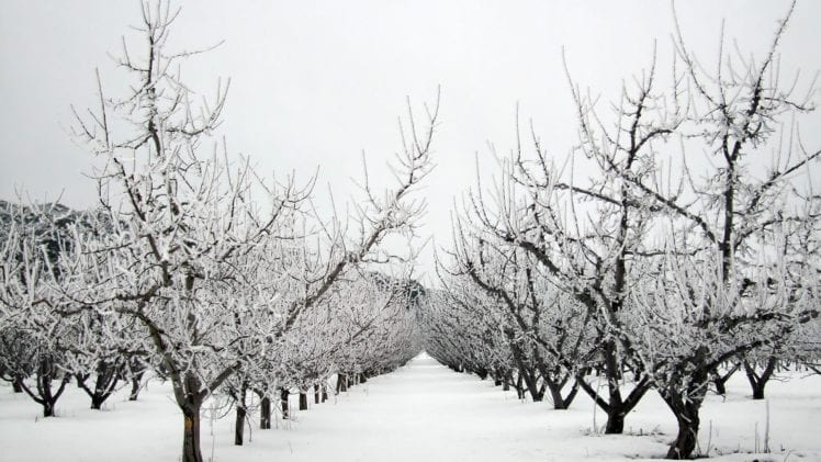 Getting the Orchard Winter-Ready