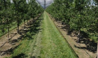 Orchard Management