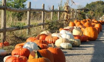 Different sorts of winter squash and pumpkins