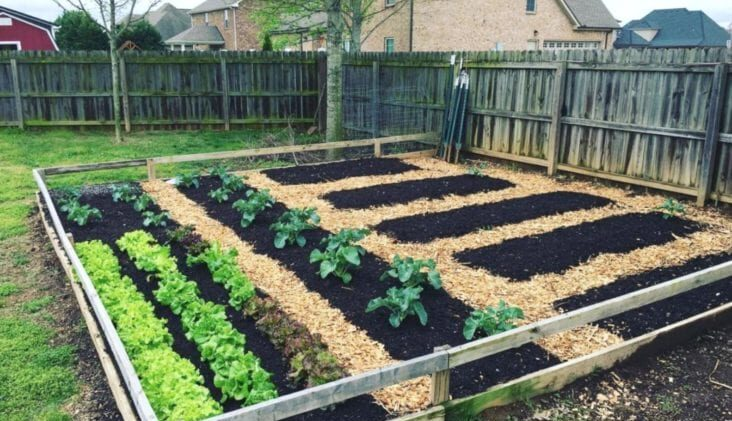 6 Gardening Instagram Accounts To Follow Right Now