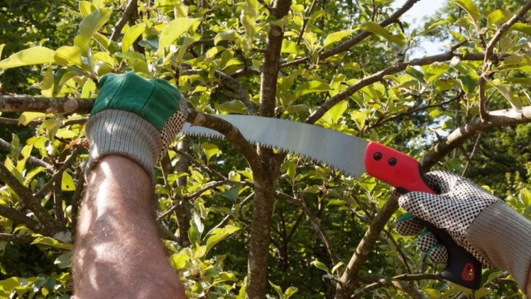 What Are The Best Pruning Saws Out There (Top 4 List)