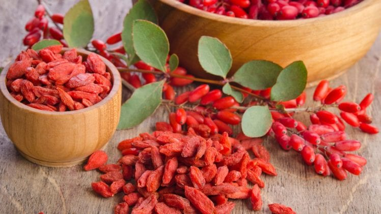 Here Is All You Need to Know about Growing the Goji Berry