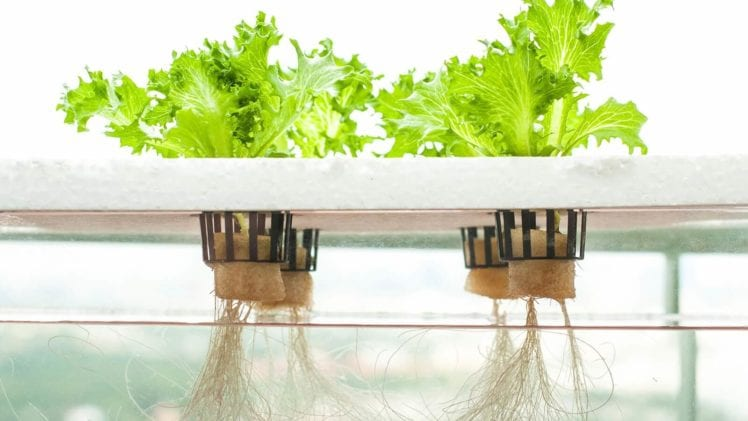 What Is So Good About Hydroponics