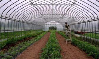 Polyhouse Farming 1