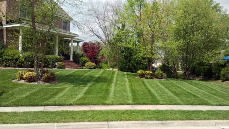 Make Your Lawn Beautiful Again