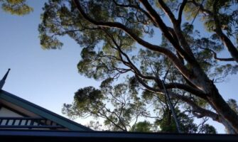 Remove a Nuisance Tree from Your Garden