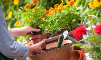 Flowers to Grow in Your Vegetable Garden