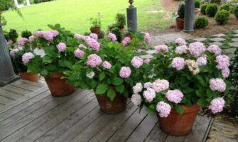 Garden With Flower Pots