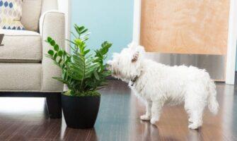 Plants near Pets