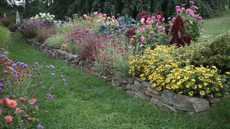 Flowers To Buy For Your Garden