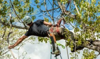 Benefits of Using Tree Service