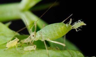7 Destructive Garden Insect Pests