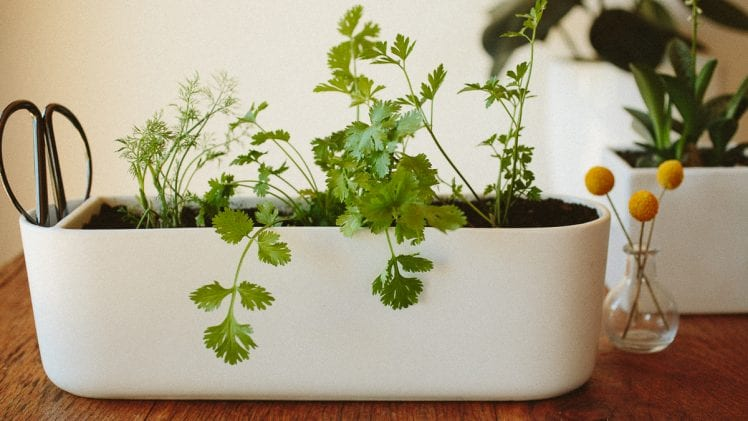 The Best Herbs to Grow Indoors