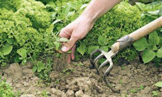 Secret Tips to Get Rid of Weeds in Your Garden
