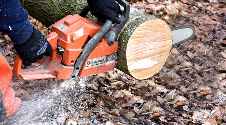 Cut Wood Slices with Chainsaw