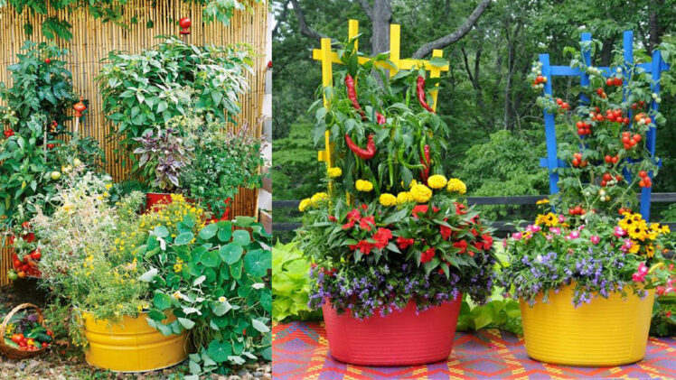 How To Create A Patio Vegetable Garden, How To Start A Patio Vegetable Garden