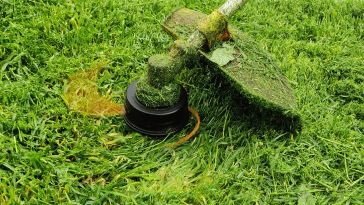 trimming grass